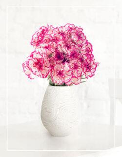 biało fioletowe goździki