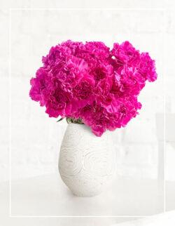 fioletowe goździki