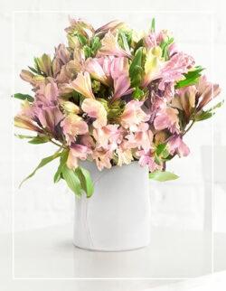 różowa alstromeria