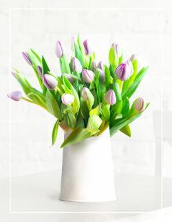 jasno fioletowe tulipany